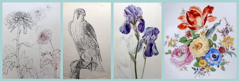 Naturstudium für Meissner Porzellan, Chrysanthemen, Falke, Schwertlilien